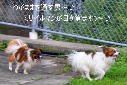 yuzukota070726-10.jpg