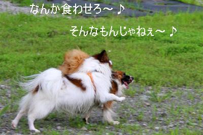 yuzukota070726-11.jpg