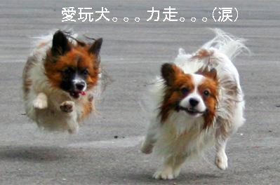 yuzukota070726-13.jpg