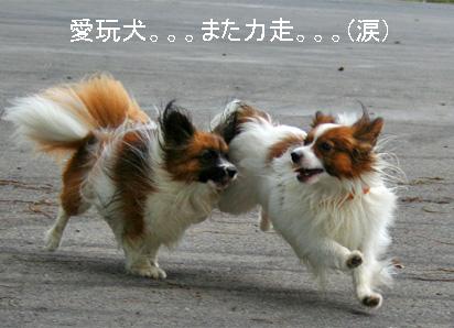 yuzukota070726-14.jpg