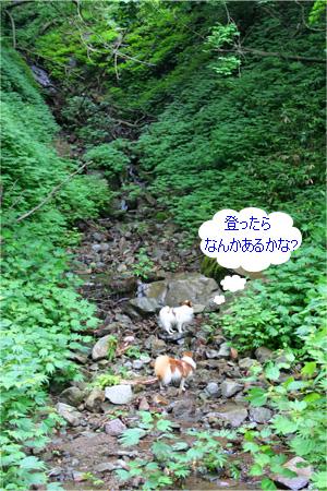 yuzukota070726-2.jpg