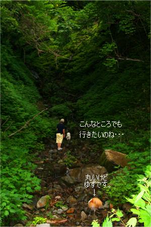 yuzukota070726-3.jpg
