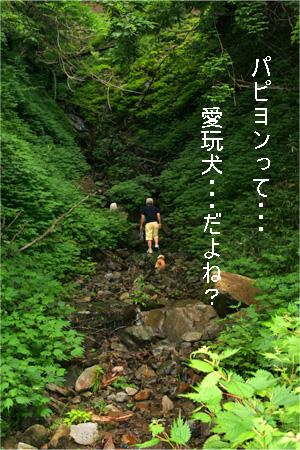 yuzukota070726-4.jpg
