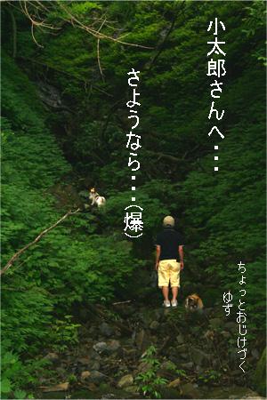 yuzukota070726-5.jpg
