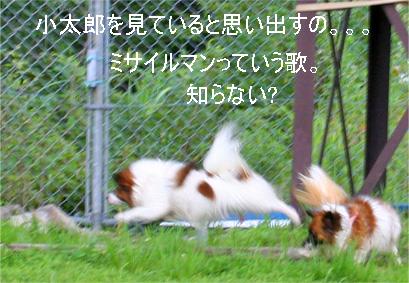 yuzukota070726-9.jpg