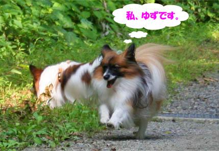 yuzukota070730-1.jpg