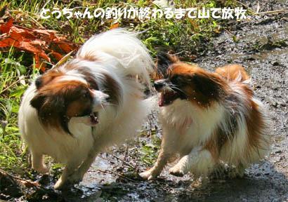 yuzukota070730-3.jpg
