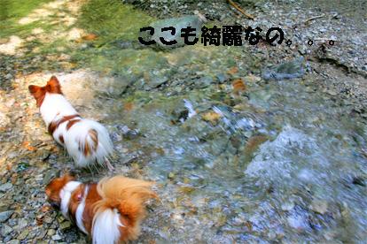 yuzukota070730-5.jpg