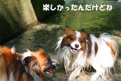 yuzukota070730-6.jpg