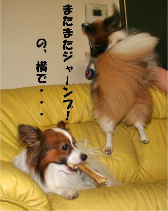 yuzukota070807-1.jpg