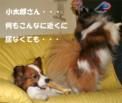 yuzukota070807-2.jpg