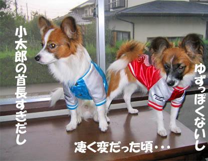 yuzukota070808-1.jpg