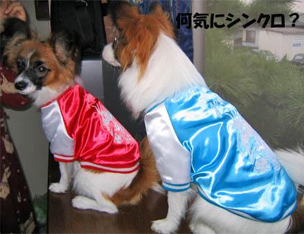 yuzukota070808-2.jpg