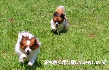 yuzukota070820-5.jpg