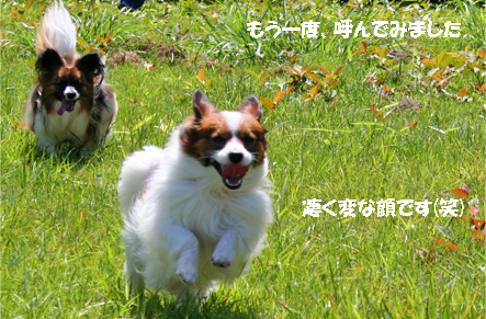 yuzukota070820-6.jpg