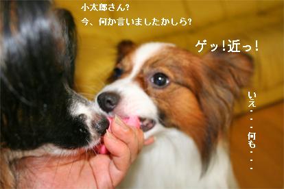 yuzukota070829-1.jpg