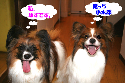 yuzukota070904-1.jpg