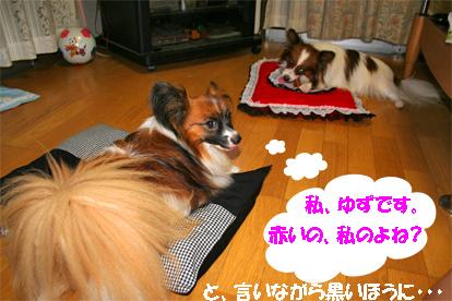 yuzukota070904-3.jpg