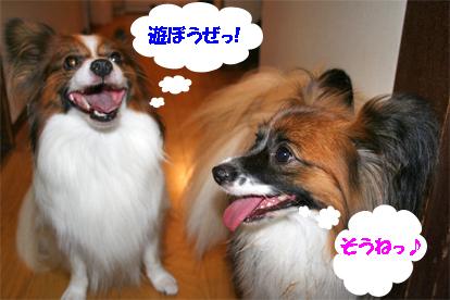 yuzukota070906-1.jpg