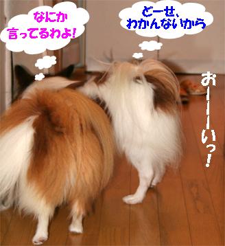 yuzukota070906-2.jpg