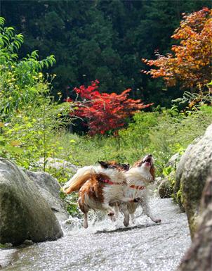 yuzukota070910-1.jpg