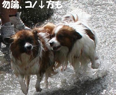 yuzukota070913-3.jpg