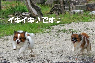 yuzukota070913-7.jpg