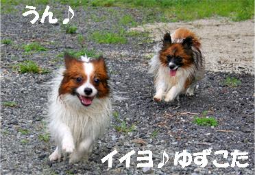 yuzukota070913-8.jpg