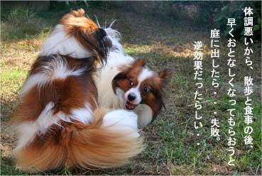 yuzukota070926-1.jpg