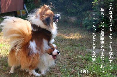 yuzukota070926-2.jpg