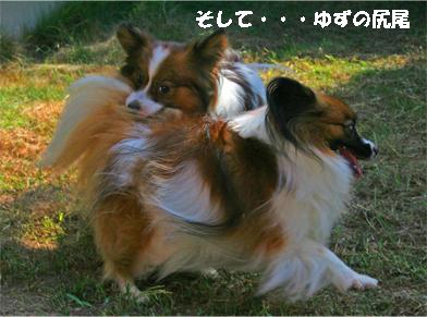yuzukota070929-1.jpg