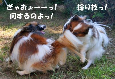 yuzukota070929-2.jpg