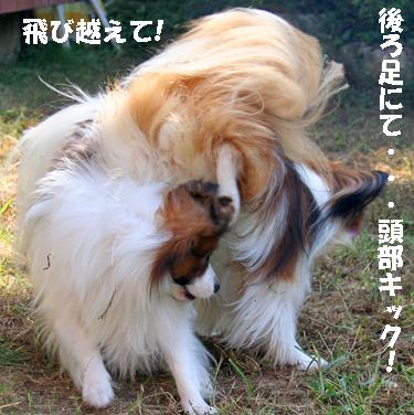 yuzukota070929-3.jpg
