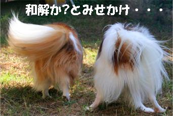 yuzukota070929-4.jpg