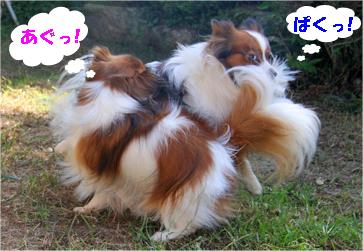 yuzukota070929-6.jpg