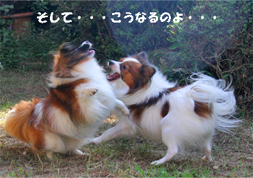 yuzukota070929-7.jpg