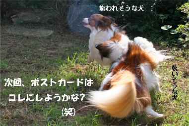 yuzukota070929-8.jpg