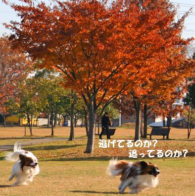 yuzukota071004-1.jpg