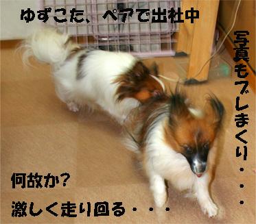 yuzukota071005-1.jpg
