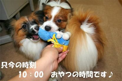 yuzukota071005-2.jpg