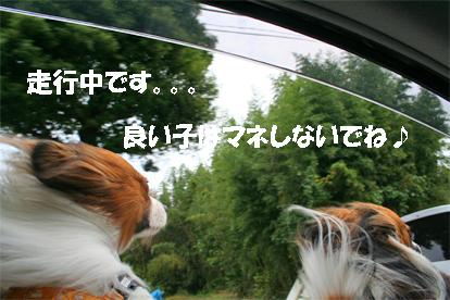 yuzukota071017-1.jpg