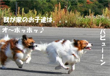 yuzukota071024-1.jpg
