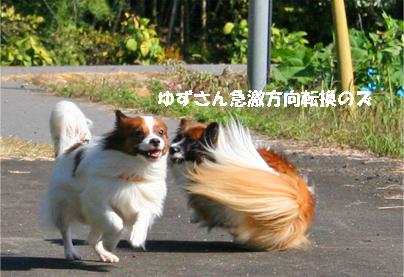 yuzukota071028-1.jpg