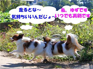 yuzukota071028-3.jpg