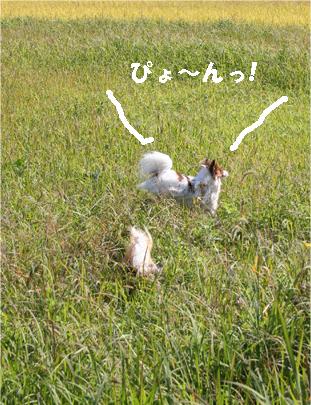 yuzukota071028-5.jpg