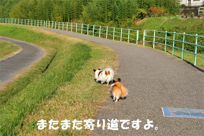 yuzukota071031-1.jpg
