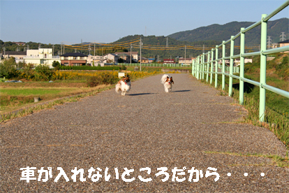 yuzukota071031-2.jpg