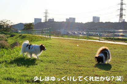 yuzukota071031-3.jpg