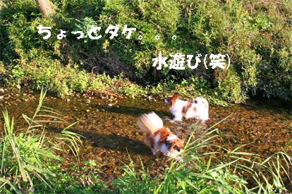 yuzukota071031-4.jpg