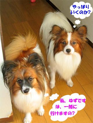 yuzukota071101-1.jpg